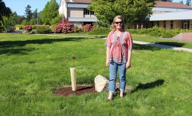 Woman stands next to small tree and dedication rock in CPTC College Green.